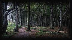 Gespensterwald # 1000000001