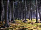 Gespensterwald 3