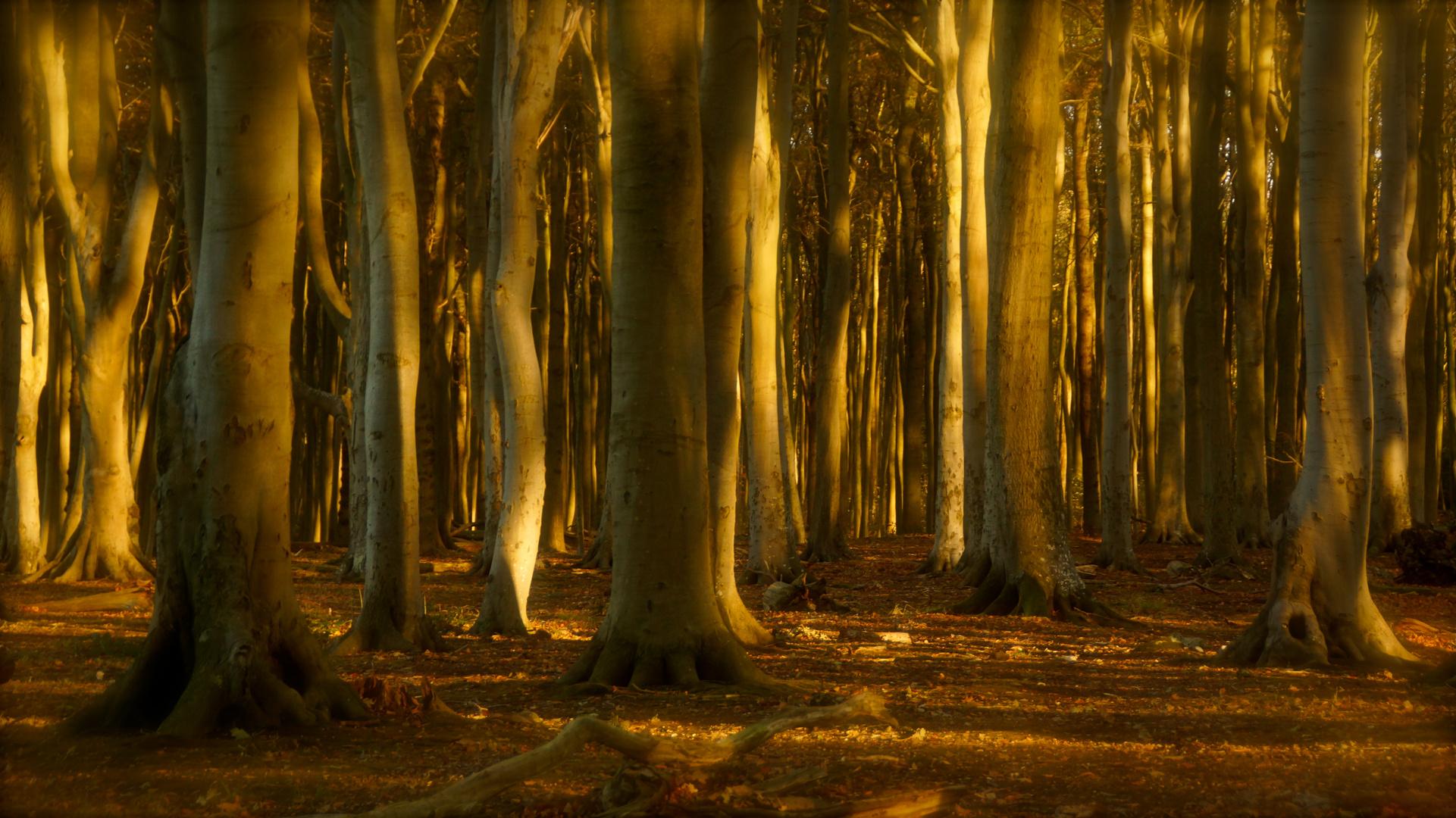 Gespensterwald bei Nienhagen