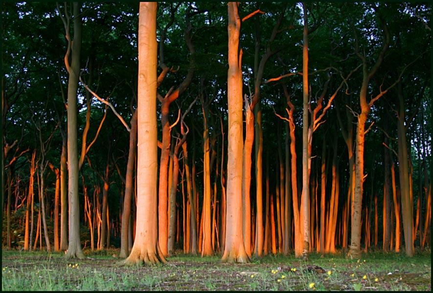 Gespensterwald im Abendlicht (2)