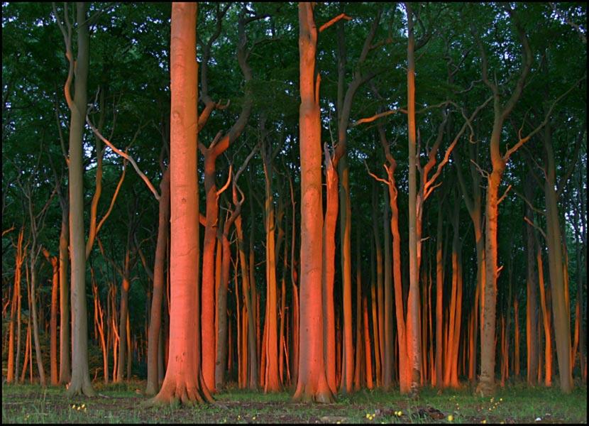 Gespensterwald im Abendlicht.(3)