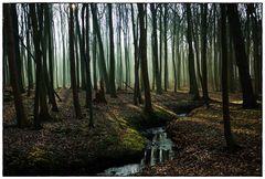 Gespensterwald Nienhagen-6