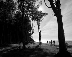 Gespensterwaldimpressionen 3