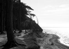 Gespensterwaldimpressionen 4