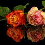 Gespiegelt Rosen
