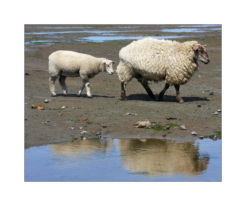 gespiegelte Wolllieferanten