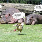 Gespräch im Zoo