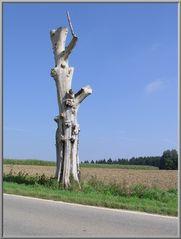 Gestatten, früher Baum...
