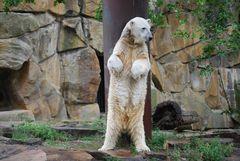 Gestatten, ich bin Knut!