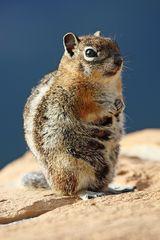 gestatten Squirrel mein Name