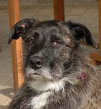 Gestatten,mein Name ist Peanut ; 4 Jahre alt und wohne nun bei Ulfert und Sabine K.