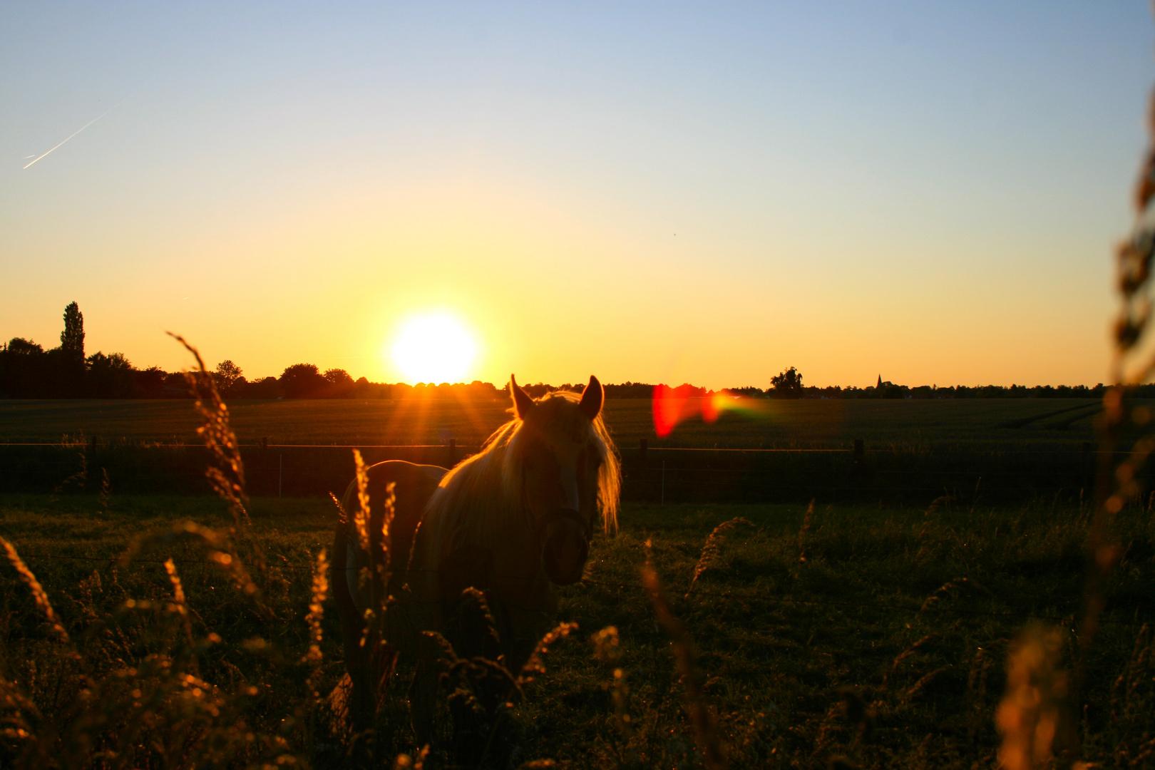 Gestern abend als die Sonne unterging....