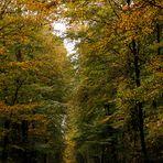 Gestern im Cappenberger Wald