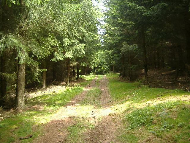 Gestern im Harz