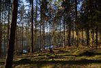 Gestern im Hevetal (Arnsberger Wald)