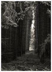 Gestern im Wald