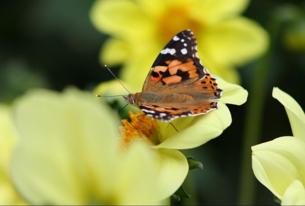 Gestern in der Flora