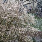 ... gestern war Schnee
