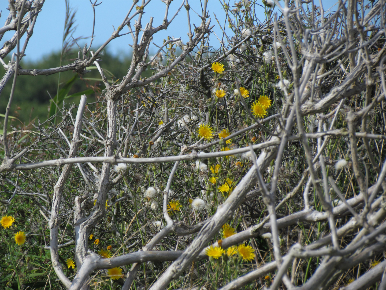 Gestrüpp mit Blüten