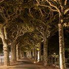 Getarnte Bäume
