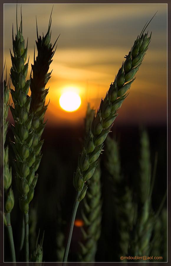 Getreide [6]