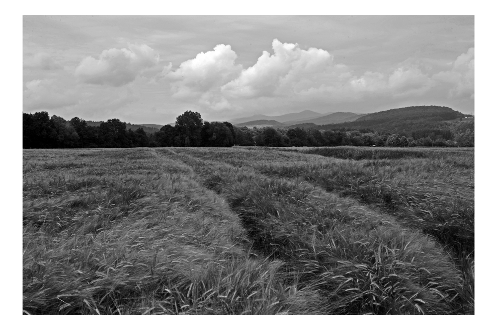 Getreide-Landschaft