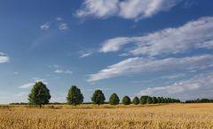 Getreide-Landschaften auf dem Kronsberg, Hannover