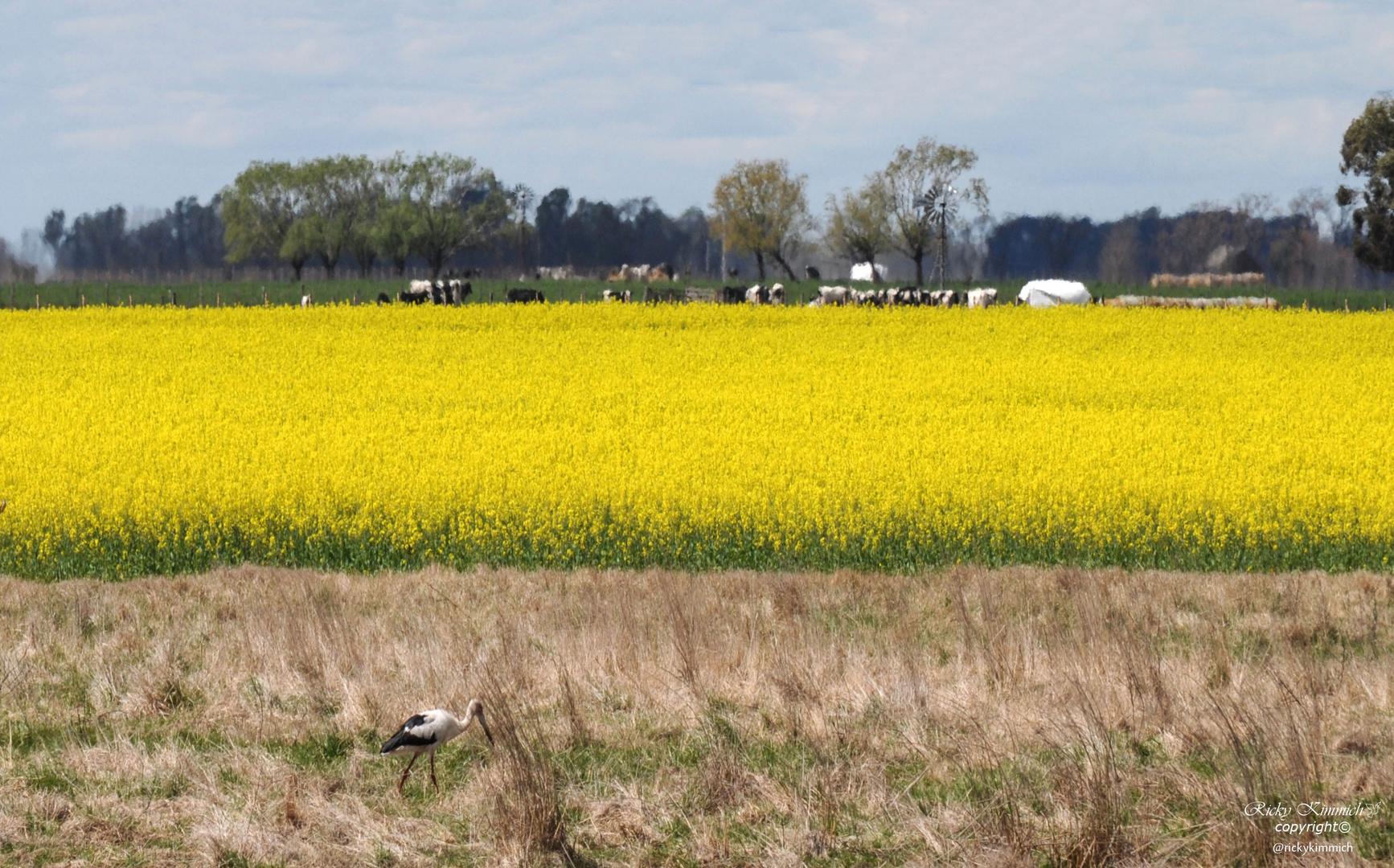 Getreide und der Storch ( Los Cereales y la Cigüeña )