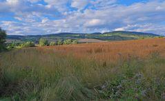 Getreidefeld (campo)