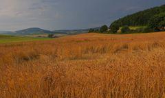 Getreidefeld, gleich regnet es (campo, pronto va a llover)