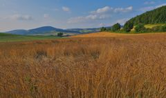 Getreidefeld, heute (campo, hoy)