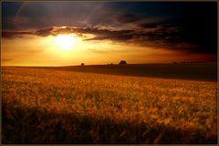 Getreidefeld in der Abendsonne