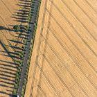 Getreidefelder