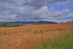 Getreidefelder (campos)