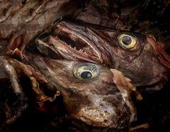 Getrocknete Fischköpfe