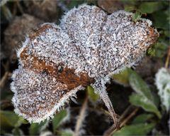 Gevatter Frost zu Besuch