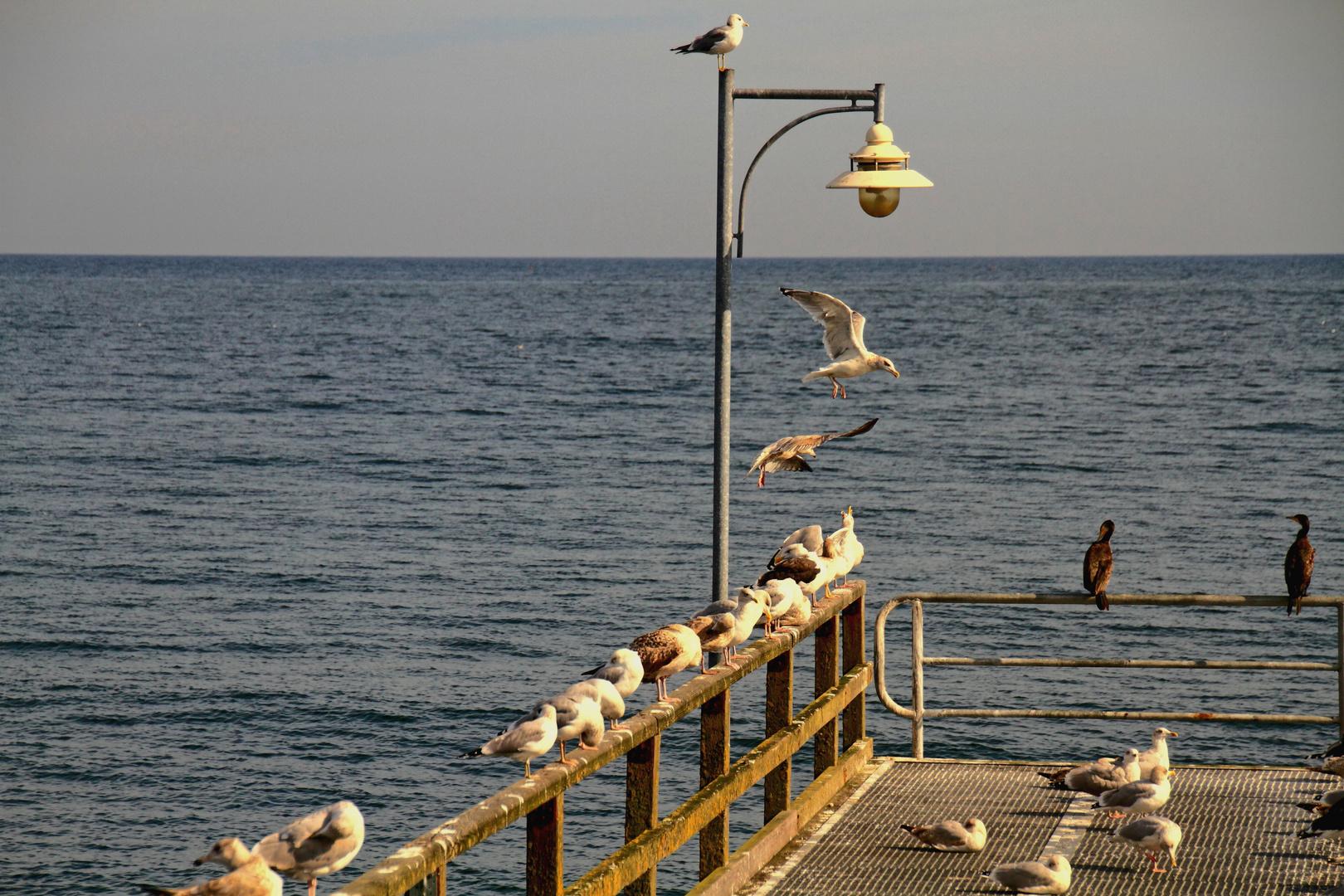 Gevögel
