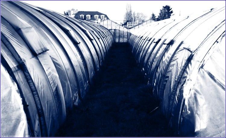 Gewachshaus Im Winter Foto Bild Archiv Besondere Projekte Oder