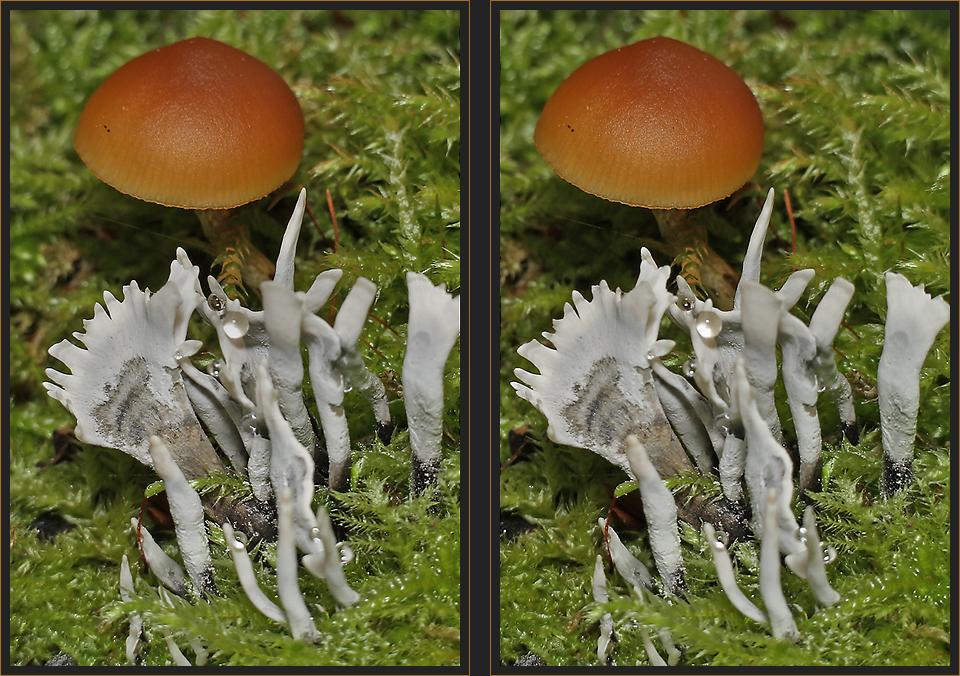 Geweihförmige Holzkeule [3D]