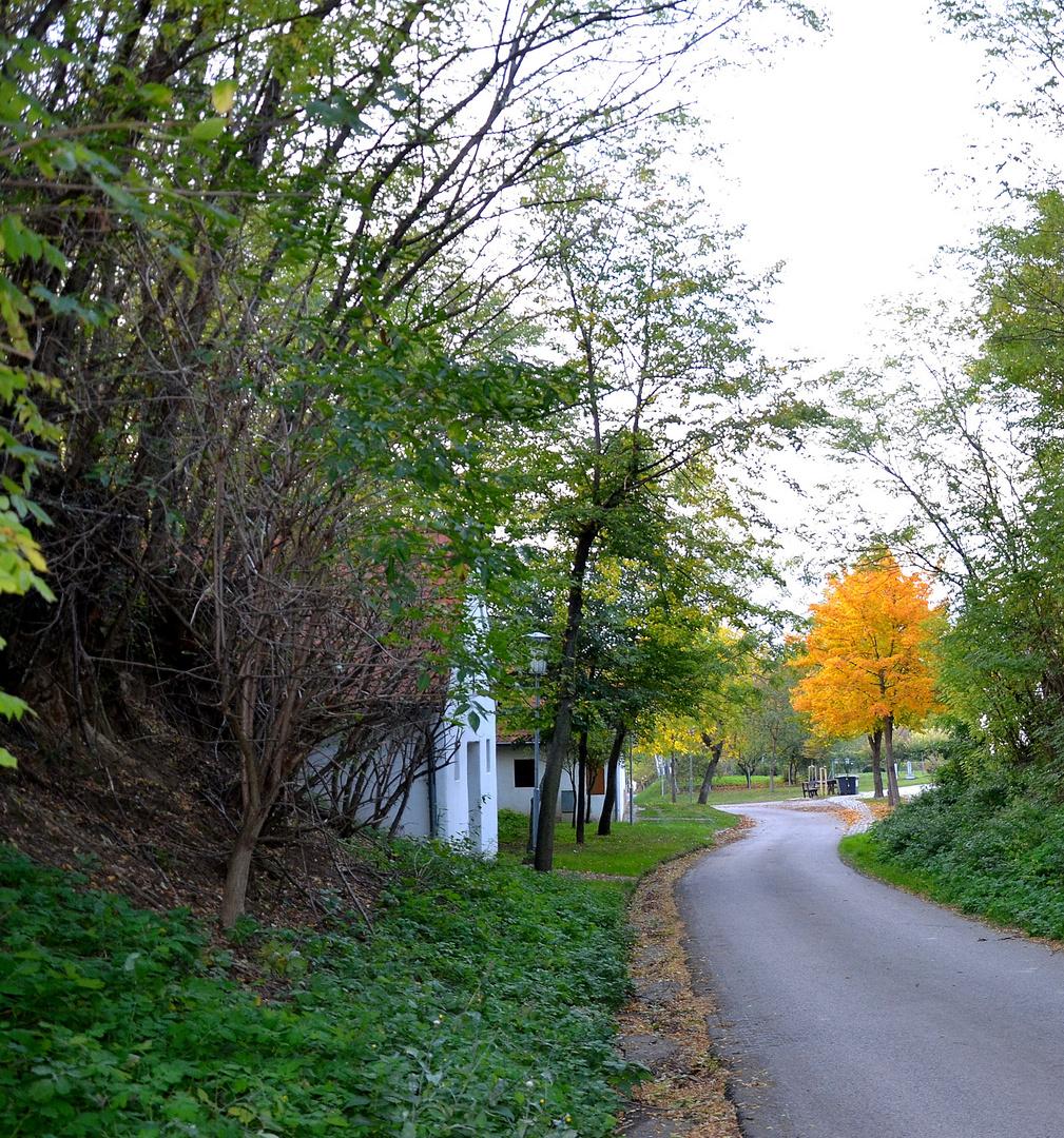 Gewundene Straße