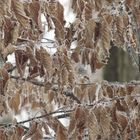ghiaccio su foglie secche