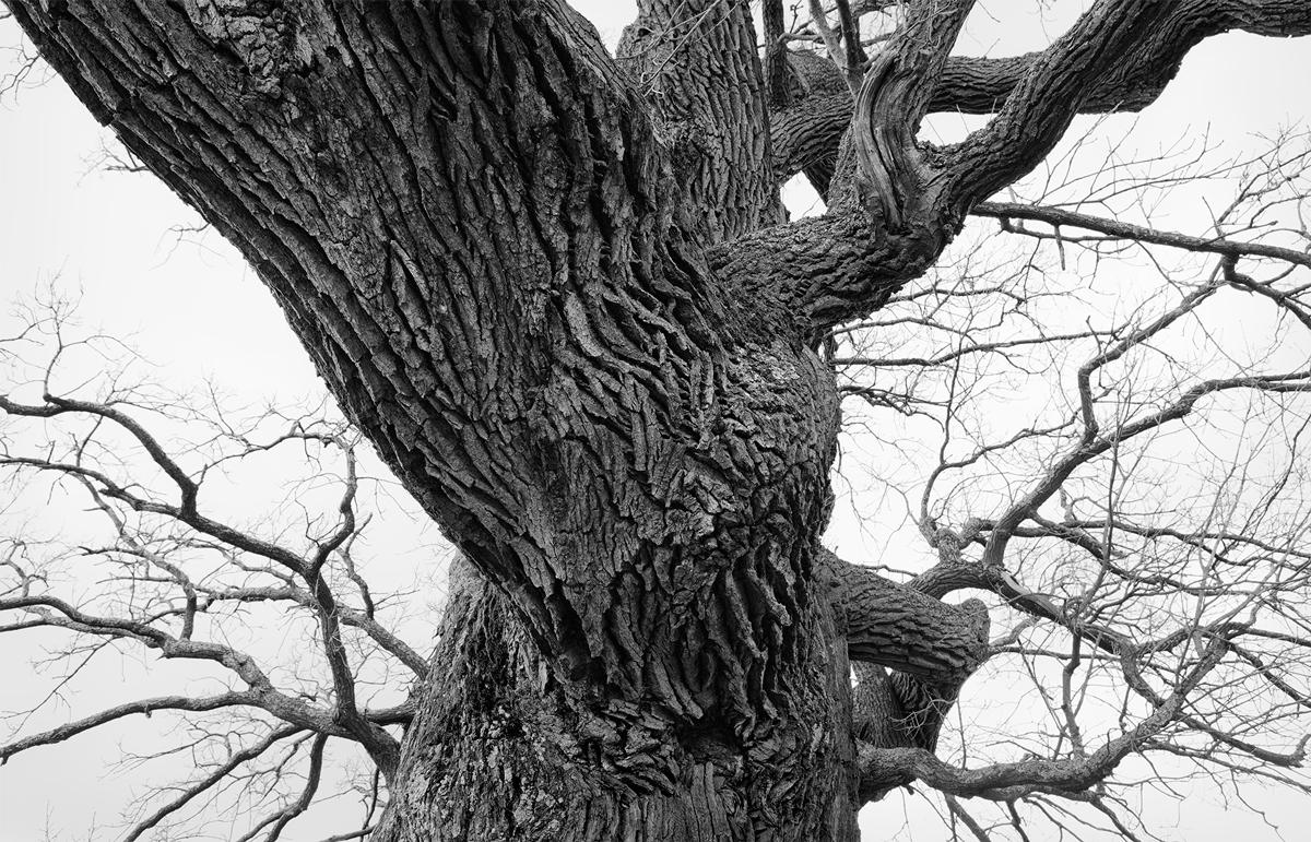 GHOST TREE [04]