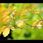 giallo dell'Etna 2