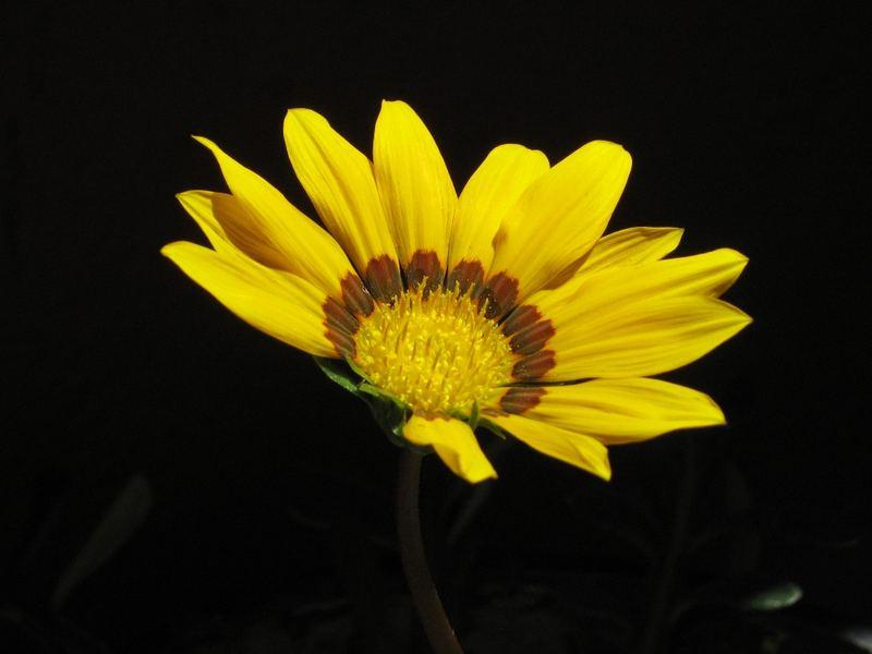 Giallo in Fiore