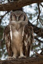Giant Owl - Part II