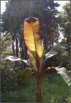 Giardino Botanico 4