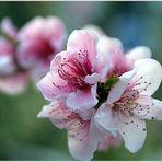 giardino in fiore....