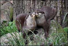 Gib Küsschen !!!