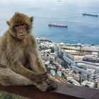 Gibraltar-Affe