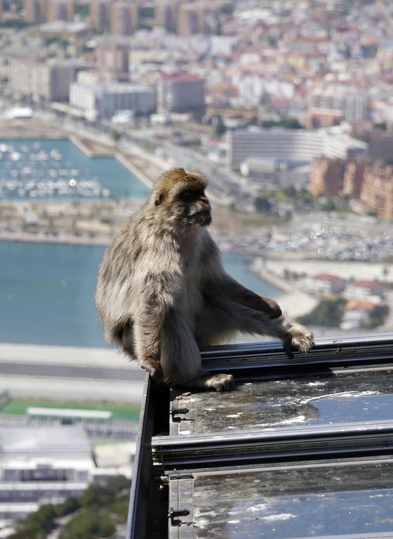 Gibraltar - Auf der Kante